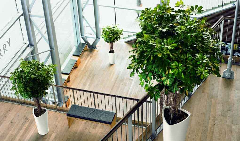 ruangan kantor yang hijau