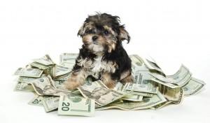 biaya hewan peliharaan