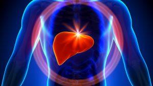 fungsi hati manusia