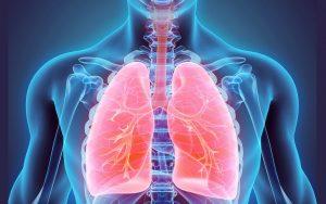 bagian paru paru